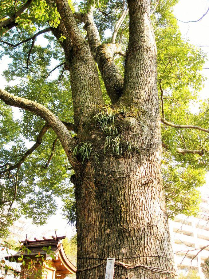 トトロの木を探してみよう!