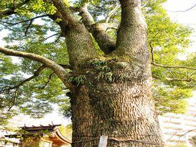 トトロの木もある!神奈川・ジブリゆかりの老舗旅館「陣屋」で日帰り温泉を楽しむコツ|神奈川県|トラベルjp<たびねす>