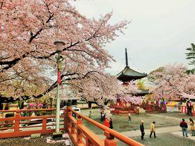 桜の季節が最高!徳川家ゆかりの「川越喜多院」は見どころ満載