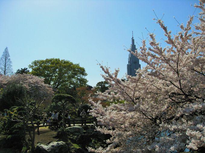 総理主催の桜を見る会も開催される