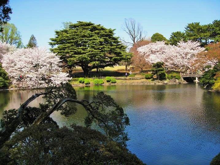 池の周りの絶景スポット