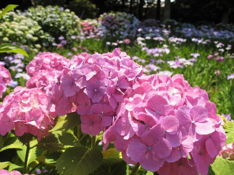花々も美しい