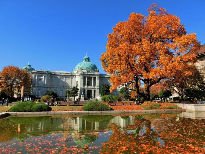 白い建物と紅葉のコントラストが美しい!「東京国立博物館」