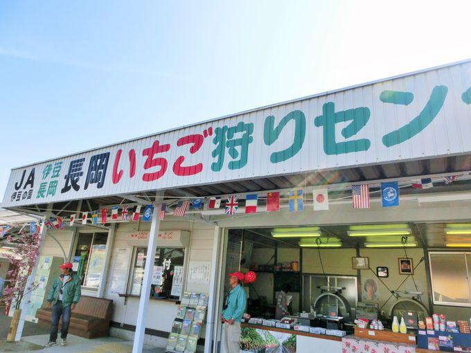 静岡生まれの甘くて美味しいいちご・章姫や紅ほっぺも!
