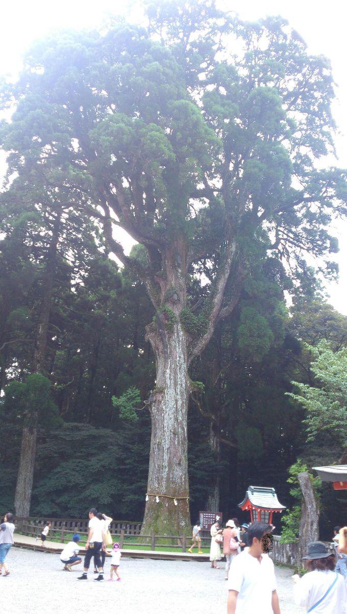 参拝者を見守る「御神木」の意外なパワー