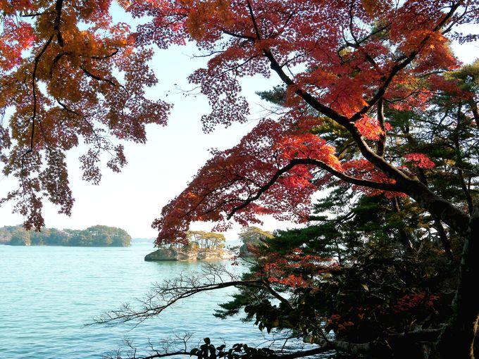 松島の地名の由来になった松を愛で松島を愛でる