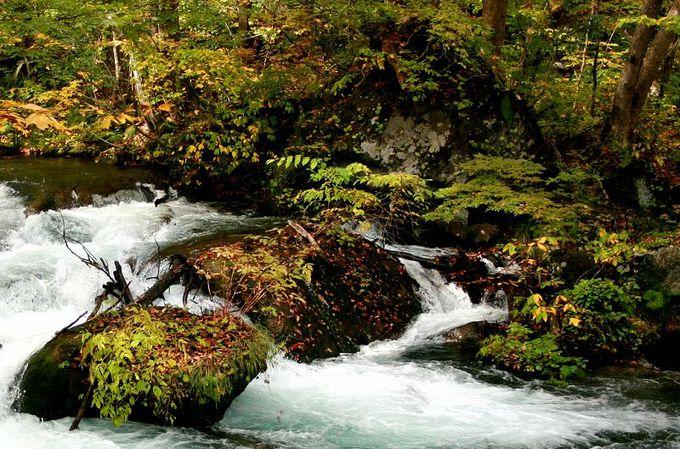 清流が紡ぎだす、日本庭園のような奥入瀬渓流