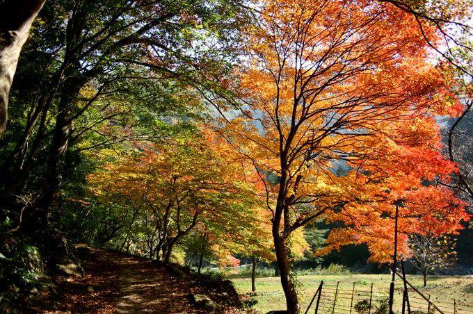 紅葉の見頃はまさに今! 10月下旬から11月上旬