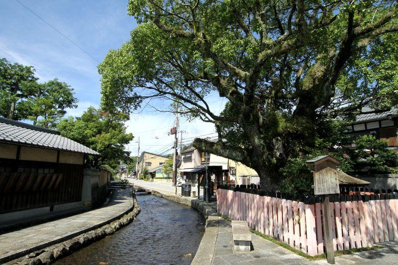 上賀茂神社から流れる禊の清流「明神川」