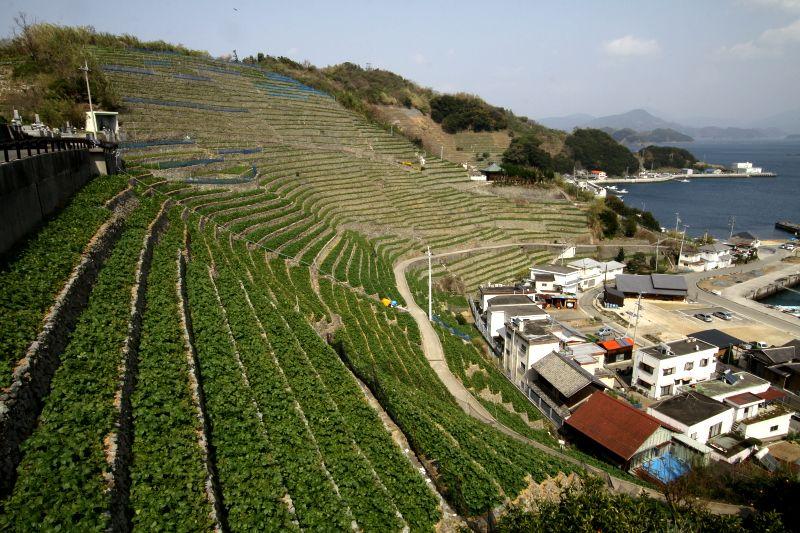 一度は見てみたい!愛媛県宇和島のアツい「闘牛」と絶景「遊子水荷浦の段畑」