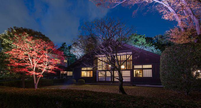 紅葉とライトアップでノスタルジック「江戸東京たてもの園」