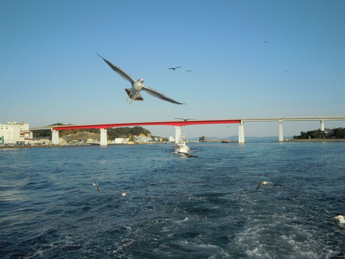 水中観光船は魚だけではない!海鳥の迫力を体験!