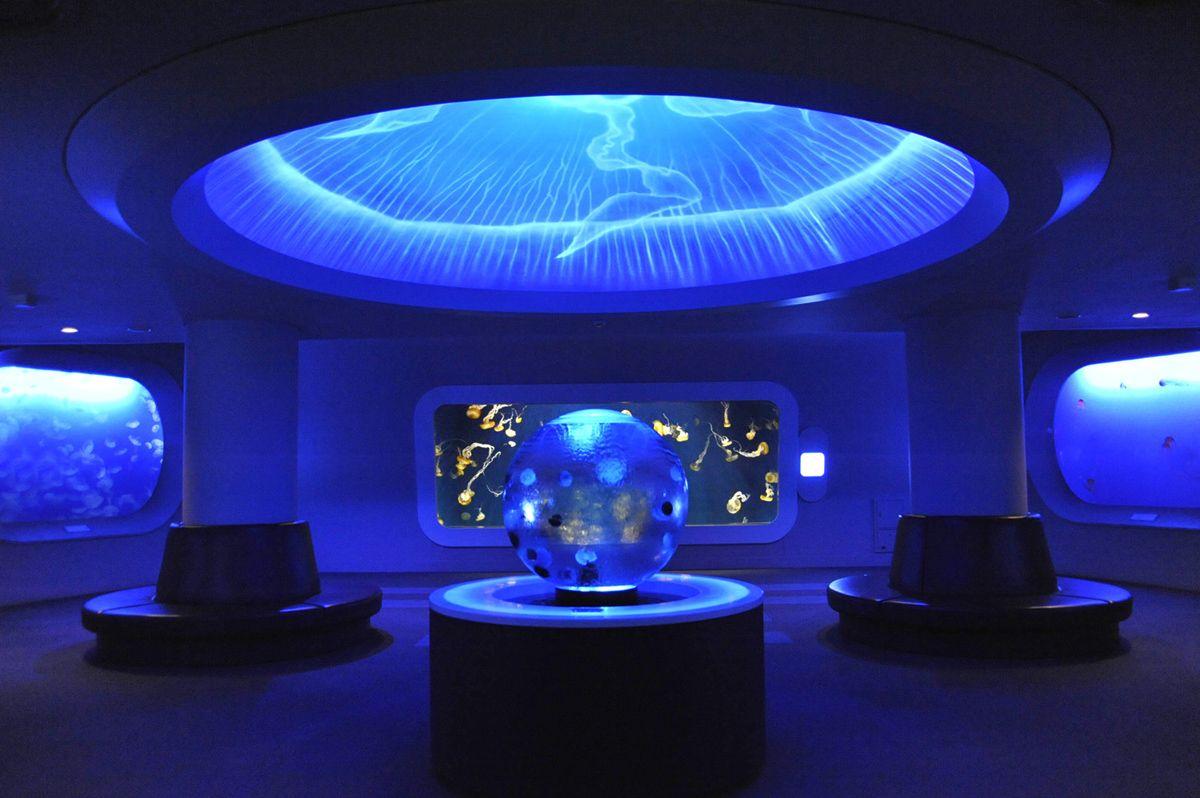 クラゲを見るなら、新江ノ島水族館がおすすめ