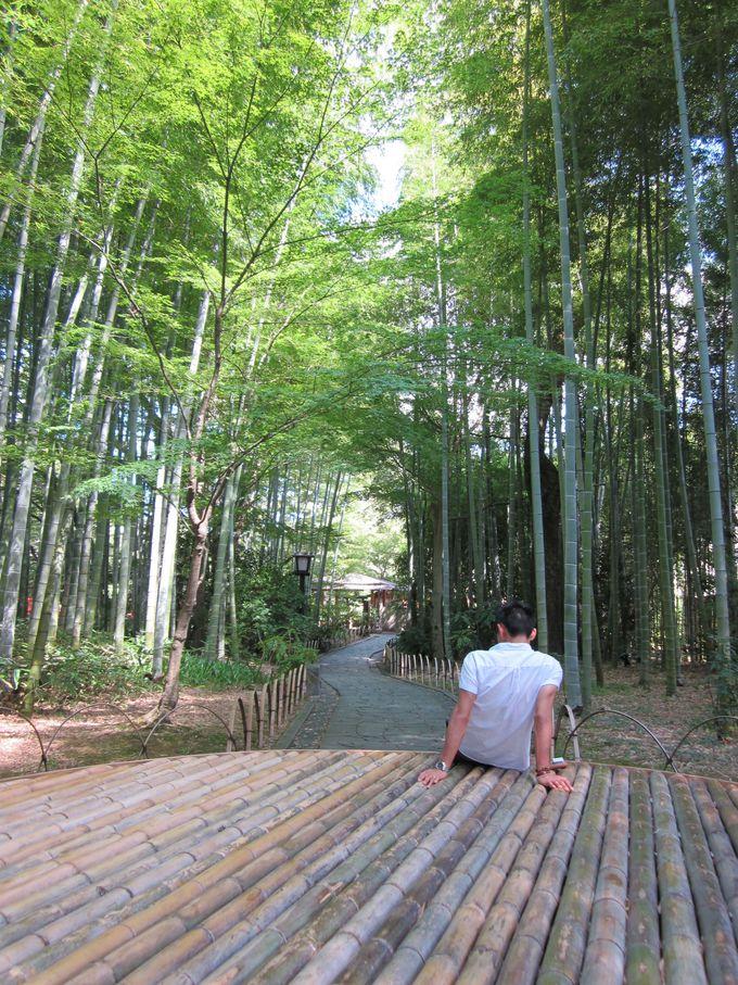 癒しの竹林へ 〜竹林の小径〜