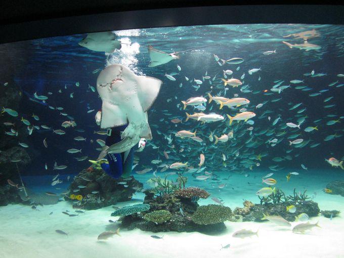 お勧めベスト2 南国の海「サンシャインラグーン」