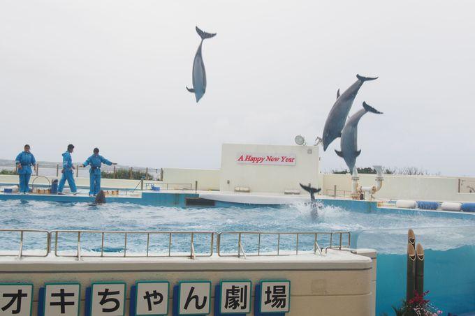 <コース1>15時〜イルカを楽しもう!!