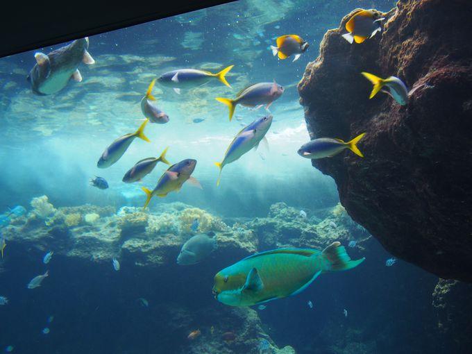 <コース2>16:30 水族館に入園、「サンゴ礁の旅」へ