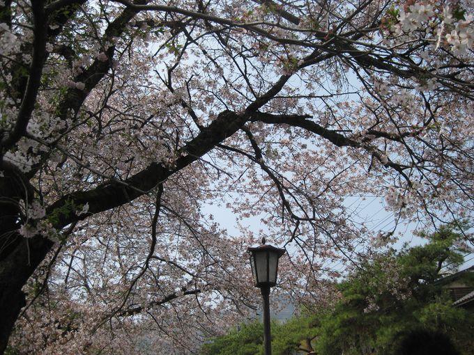 <お勧めその2>宝登山への参道