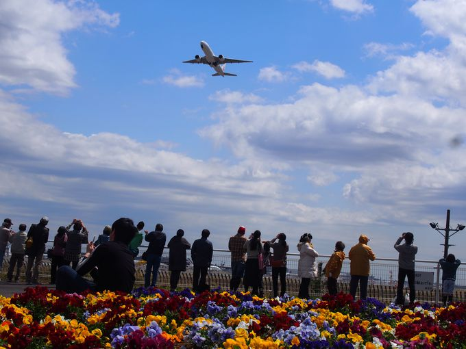 成田に来たら飛行機が見たい!「航空科学博物館」と「さくらの山」