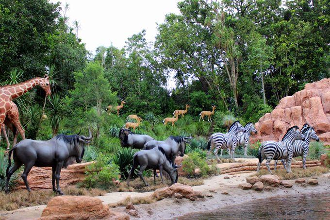 鳴り響く音楽と動物たちの鳴き声にドキドキワクワク!壮大なアフリカの大地へ