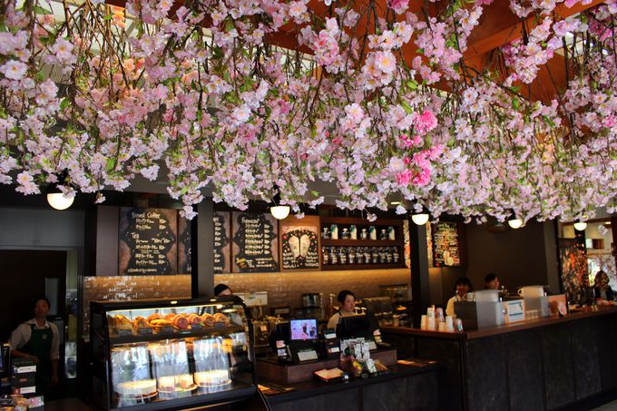 入ってびっくり!カウンターの上に咲き乱れる桜!