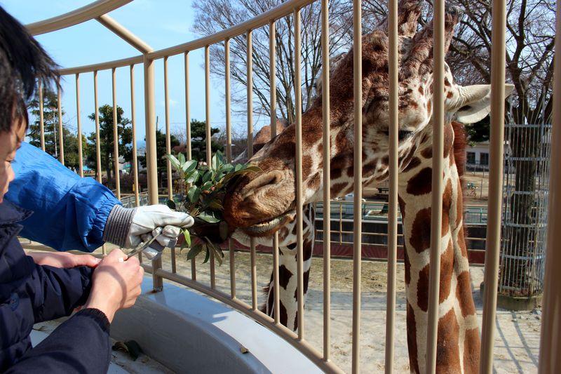 間近で見られる!触れ合える!子連れで行きたい動物園8選