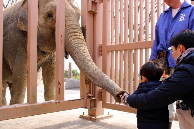 迫力満点!ゾウにおやつをあげよう!
