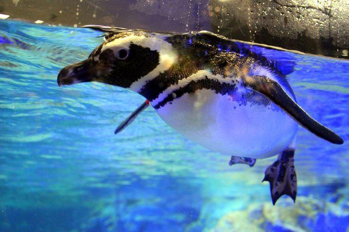 愛嬌たっぷりのペンギンたち