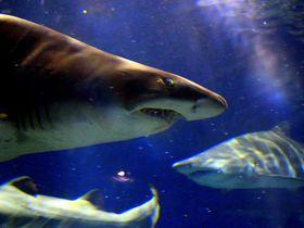 日本トップクラス規模「アクアワールド茨城県大洗水族館」が人気の6つの理由|茨城県|トラベルjp<たびねす>