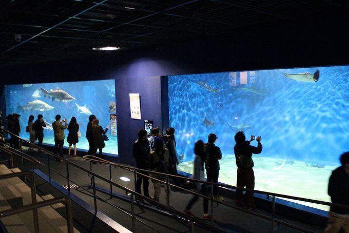 家族やカップルにお薦め!観光客にも大人気の個性派水族館「アクアワールド茨城県大洗水族館」