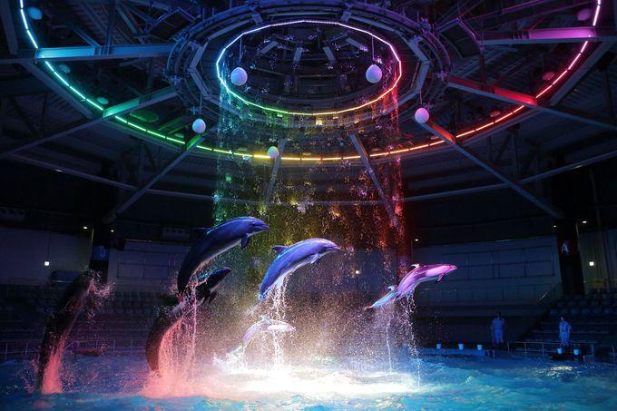 イルカのパフォーマンスはロマンチックに♪夜の水族館を楽しもう!