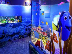 ドリーに会いに行こう!池袋サンシャイン水族館「ファインディング・ドリーの世界展」2016|東京都|トラベルjp<たびねす>