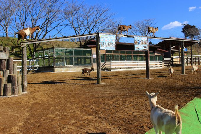 ヤギが空中散歩する驚きの光景も!ふれんZOO広場が面白い!