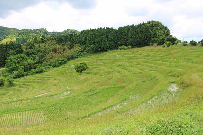 まさにウブド!緑が美しい「夏」の景色を堪能しよう