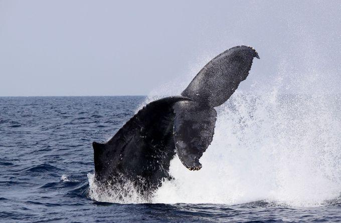 沖縄の自然を満喫しよう!