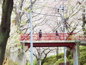 思い出すのは誰ですか?名曲の舞台、東京「桜坂」を歩く春|東京都|トラベルjp<たびねす>