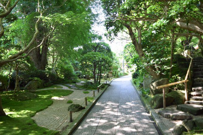 報国寺の境内へ入ったら、まずは本堂へお参りを