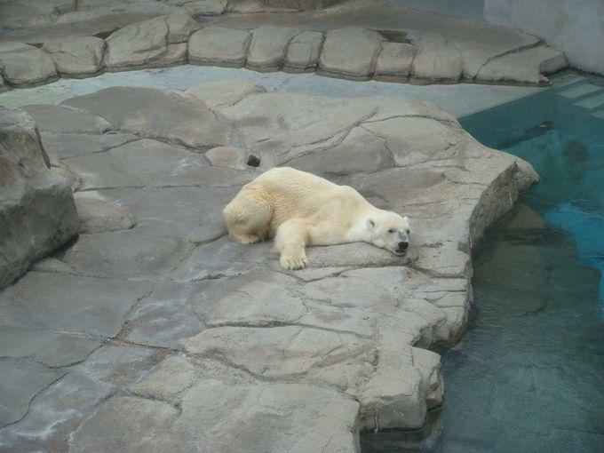 最後に、王子動物園の基本情報