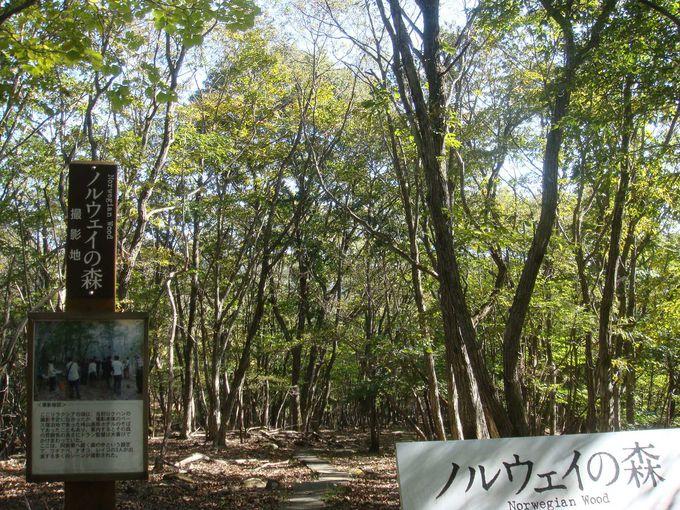 映画『ノルウェイの森』のロケ地が兵庫にあった?!「峰山高原」