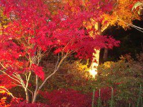 「紅葉灯花」有馬温泉街・夜の名所、紅葉ライトアップイベント!