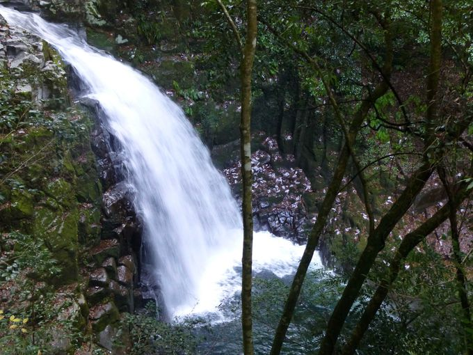 最初の「赤目五瀑」は、迫力満点の不動滝