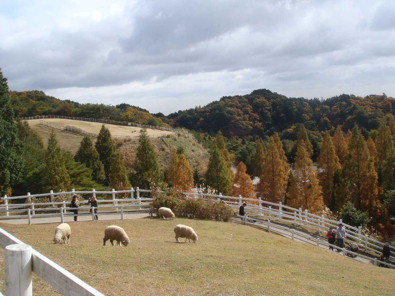 「六甲山牧場」楽しみ方のまとめ〜羊とたわむれ、体験型イベントやグルメを満喫!