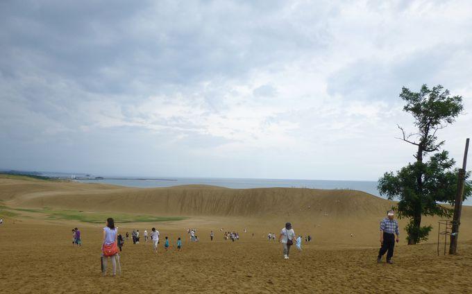 雄大な砂の大地、「鳥取砂丘」へ。ラクダやパラグライダーなどのアクティビティも豊富!