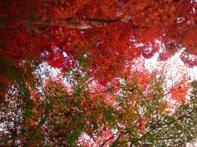 瑞宝寺公園の紅葉の見ごろ、そしてアクセス方法のコツ