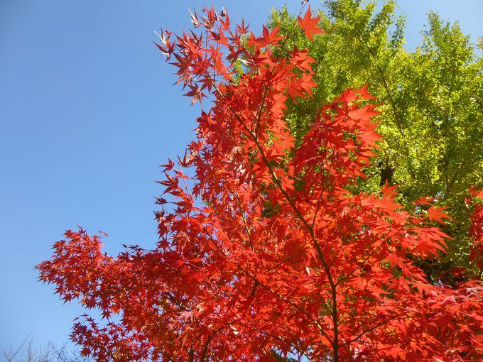 少林山達磨寺の紅葉の見頃・アクセス方法などまとめ