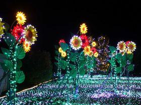 関西最大級の光の祭典「神戸イルミナージュ」神戸フルーツ・フラワーパーク