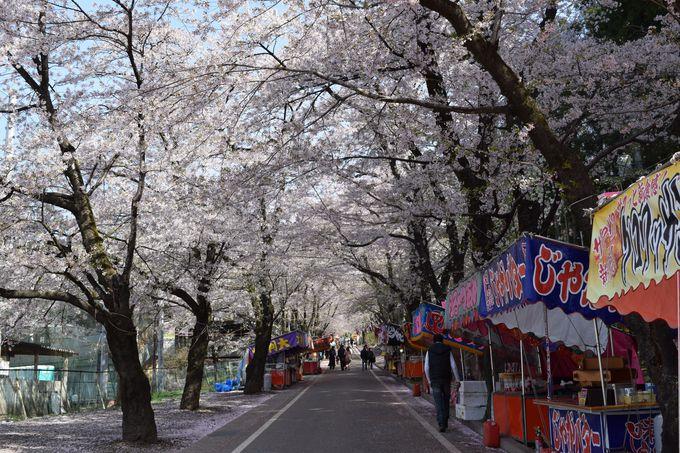 「赤城南面千本桜まつり」イベントやランチ情報