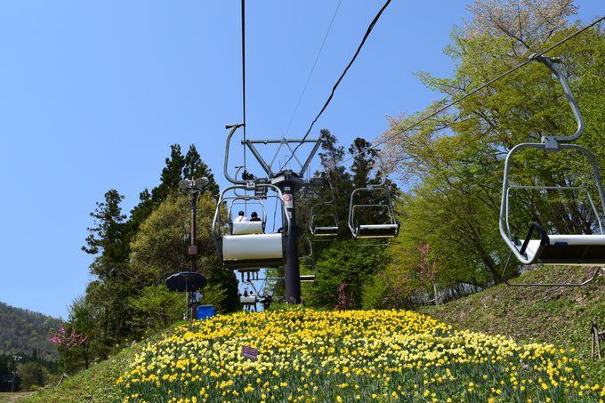 リフトに乗って頂上まで「天空散歩」を楽しむ