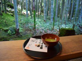 朝一番がオススメ。鎌倉・竹林美しい報国寺「休耕庵」でお抹茶を|神奈川県|トラベルjp<たびねす>