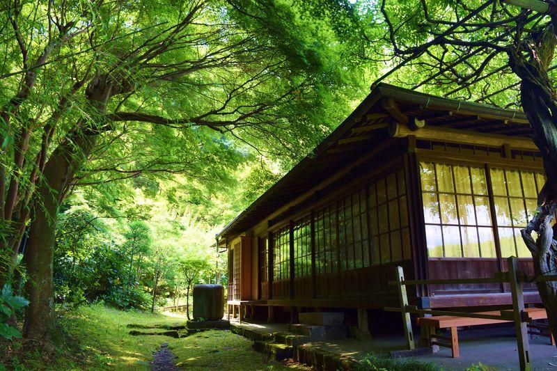 美しき緑の世界。鎌倉「英勝寺」...